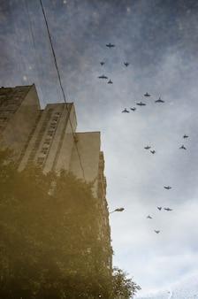 비가 온 후 아스팔트 웅덩이에 있는 건물과 날아다니는 새의 반사
