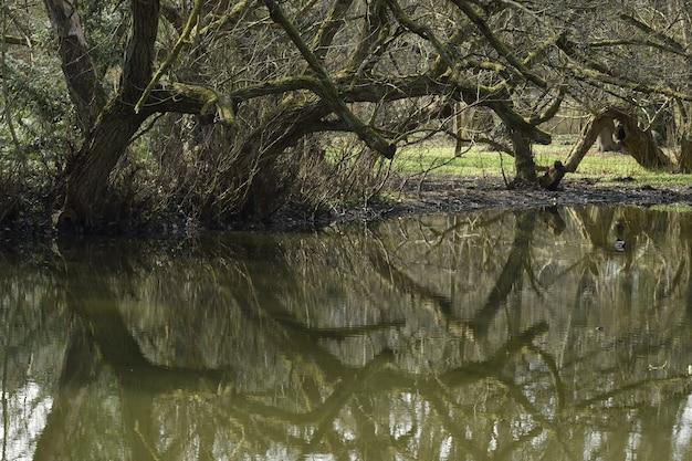 昼間の湖の上の木の反射