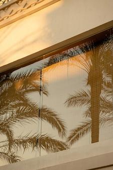열대 국가에서 빛 건물의 창문에 야자수 가지의 반사