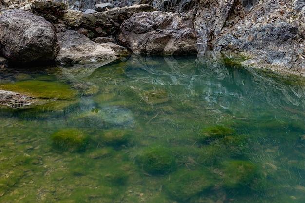 맑은 물과 수중 생물의 반사