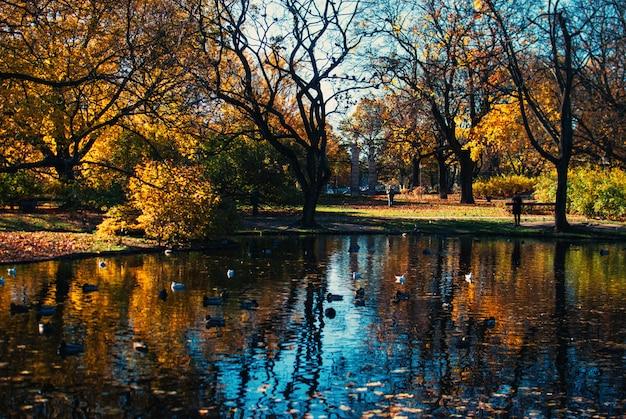Отражение красивых деревьев и голубого неба в озере