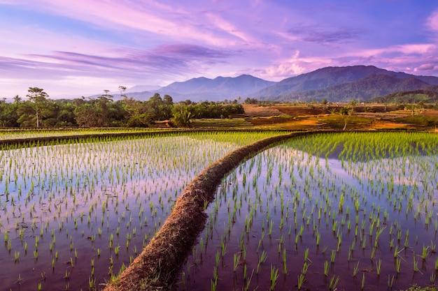 インドネシア、ベンクルウタラ、ケムムの棚田の水に沈む夕日と山々の反射