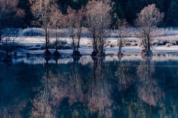 낮 동안 호수에있는 나무의 반영