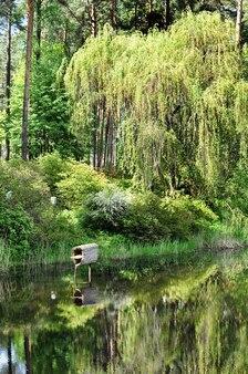 봄에 녹색 해안, 진달래 꽃과 도시 연못에 나무의 반영