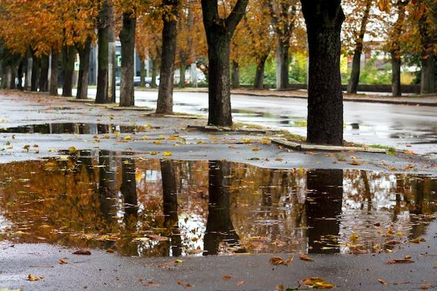 雨上がりの秋に都市公園の水たまりにある木の反射_