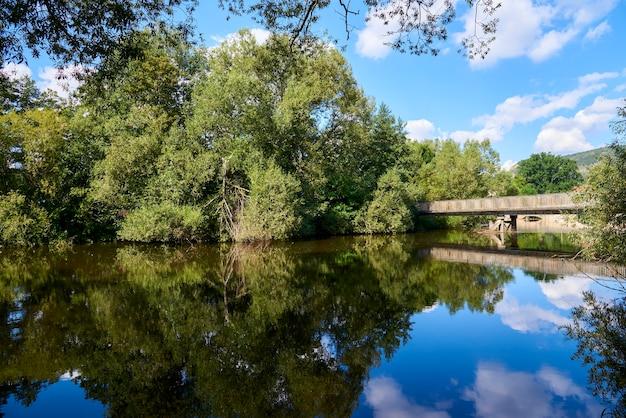 晴れた日の水中の木々の反射