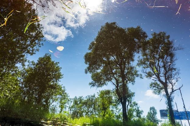 여름 화창한 날 물 표면에 나무의 반사. 추상 사진.