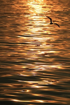 Reflection of the rising sun ray shimmering sea surface with a silhouette of flying seagull