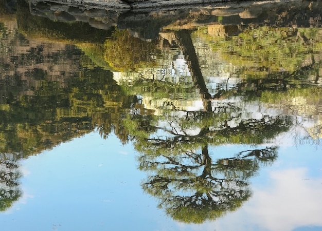 A reflection on the water of japanese bonsai pile tree and sky background.