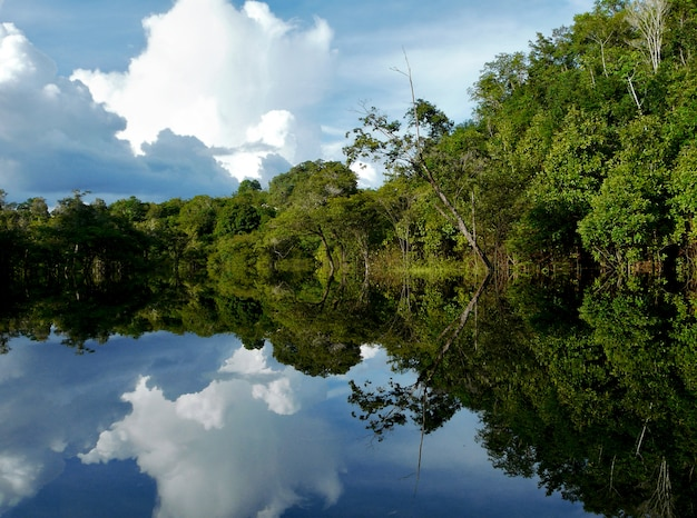 Reflections of amazon river, brazil
