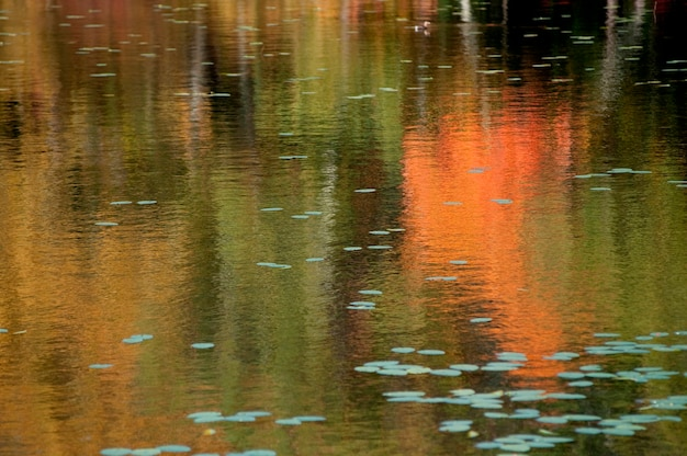 Reflections in a pond in the hamptons