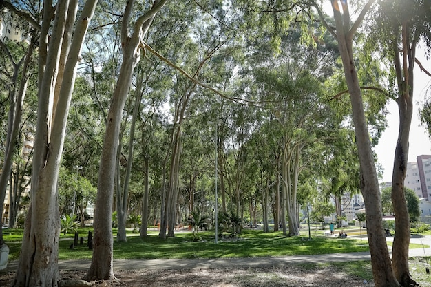 Registration of the public tree heritage on sidewalks flowerbeds squares and green areas
