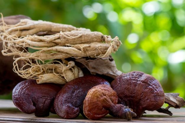 Reishi or lingzhi mushroom and ginseng on nature background.