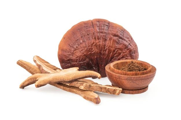 Reishi or lingzhi mushroom isolated.