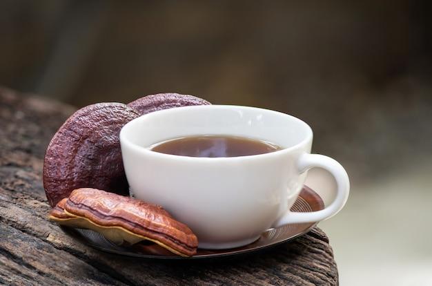 Reishi or lingzhi mushroom and tea in nature.