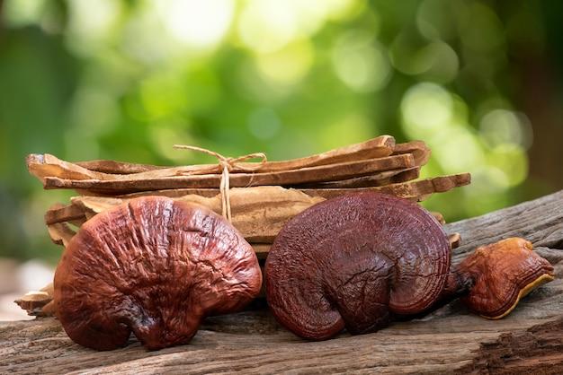 Reishi or lingzhi mushroom.