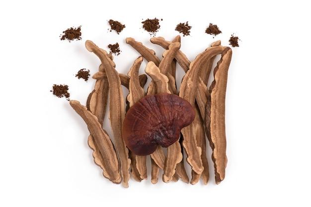 Reishi mushroom isolated on white surface.