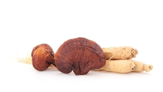 Reishi 또는 lingzhi 버섯과 인삼 흰색 배경에 고립.