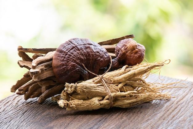 Reishi 또는 lingzhi 버섯과 인삼 자연 배경.