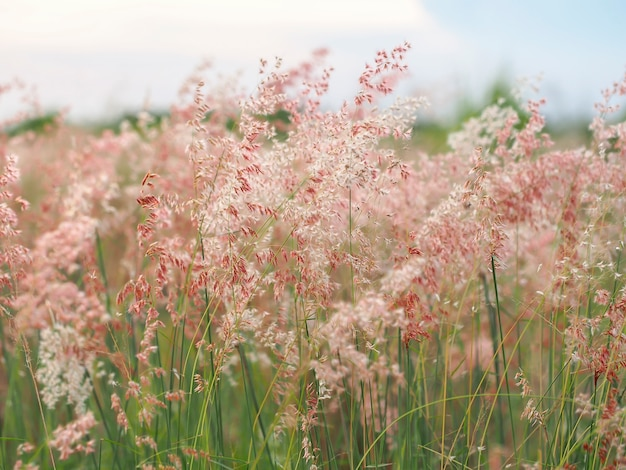 Расслабьтесь в лугах цветов на открытом воздухе