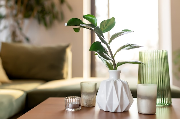 Relaxing time at comfort home with candles and vase with zamioculcas at wooden table. green sofa and rays of sun.