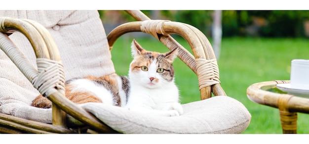 Расслабляющий белый рыжий кот лежит на стуле в саду на улице в жаркие летние дни. садовый пейзаж со стулом в природе. отдых в парковом кафе. внешний двор. портрет кошки длинный веб-баннер.