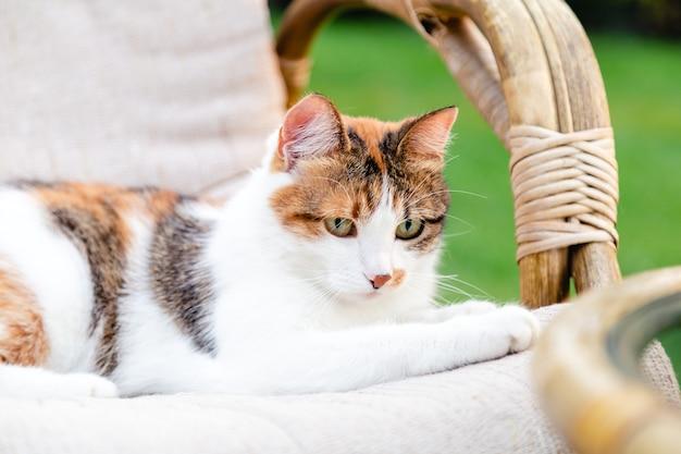 Расслабляющий белый рыжий кот лежит на стуле в саду на улице в жаркие летние дни. садовый пейзаж со стулом в природе. отдых в парковом кафе. внешний двор. кошачий портрет.