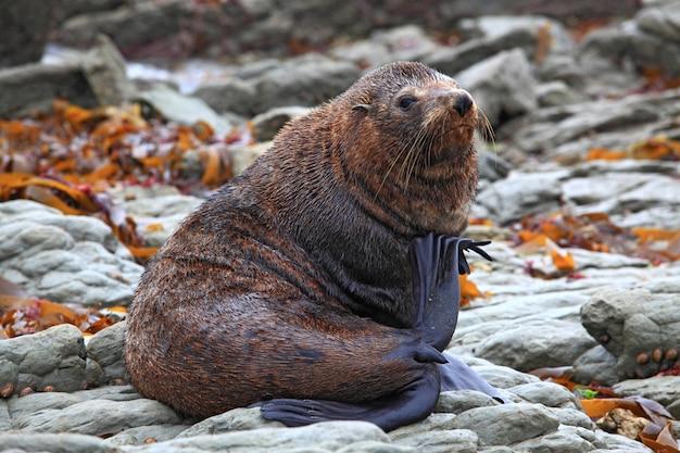 Relaxing wild seal