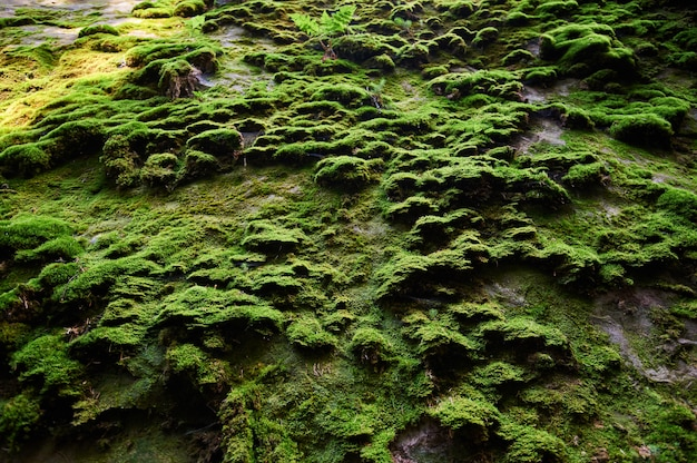 Relief of rock with moss. cliff natural background. rock covered with moss.