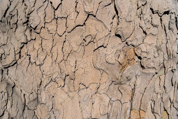 Texture in rilievo della corteccia marrone di un albero da vicino