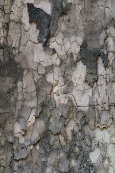 Relief texture of the brown bark of a tree close up