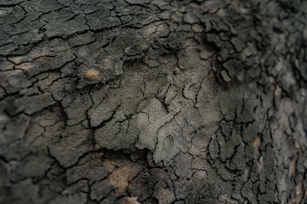 Relief texture of the dark bark of a tree close up