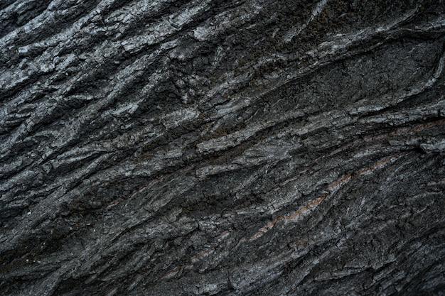 Texture in rilievo della corteccia scura di un albero da vicino