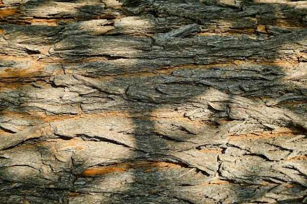 Рельефная текстура коры дерева maclura pomifera или кадыка. крупный план текстуры коры.