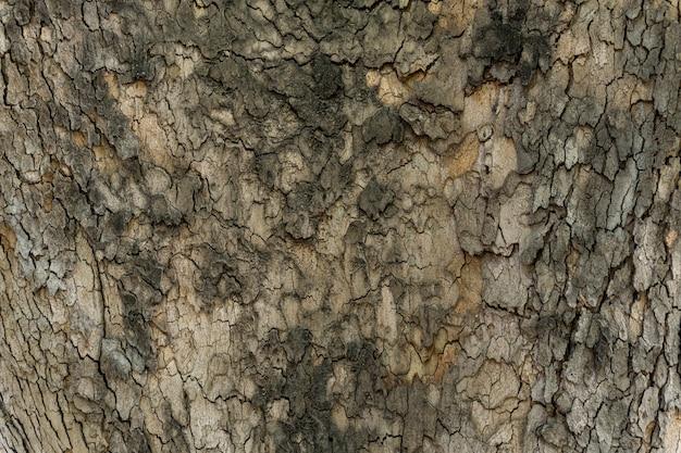木の茶色の樹皮のレリーフテクスチャをクローズアップ
