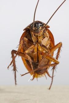 죽은 바퀴벌레의 유적