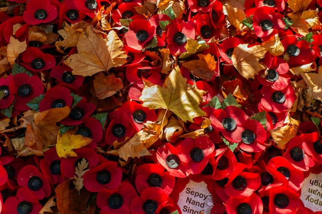 Remembrance day poppies and autumn leaves.
