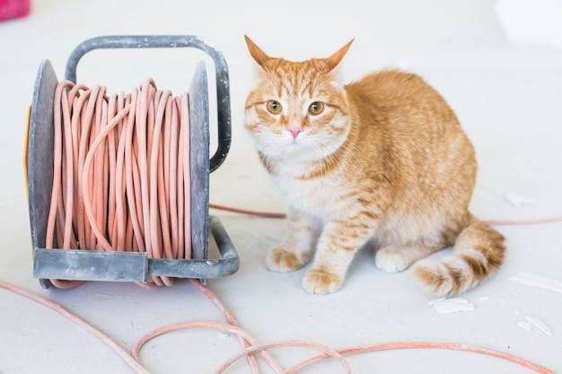 リフォーム、修理、ペットのコンセプト-改装中に床に座っている面白い生姜猫