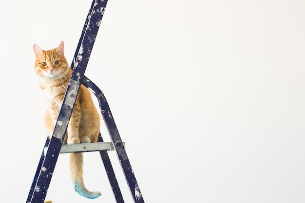 修理、壁の塗装、猫は脚立に座っています。コピースペースのある面白い写真