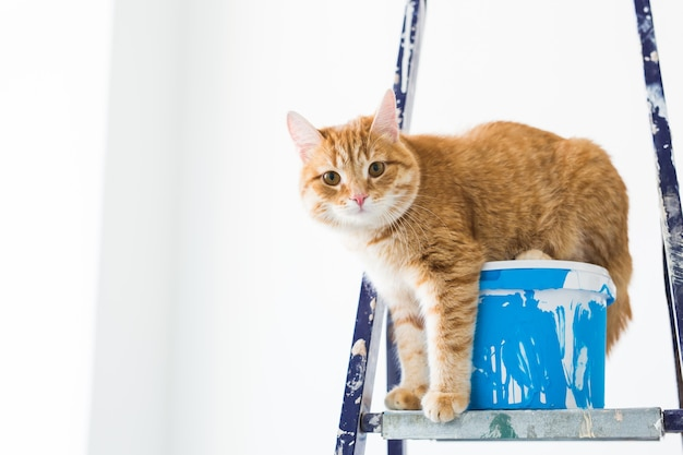 修理、壁の塗装、猫は脚立に座っています。面白い画像。