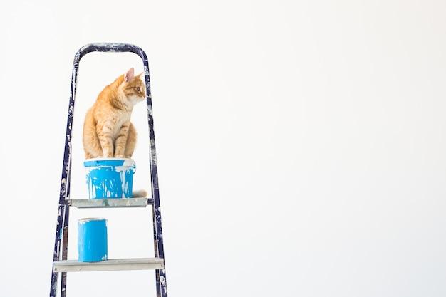 수리하고, 벽을 칠하고, 고양이는 사다리에 앉습니다.