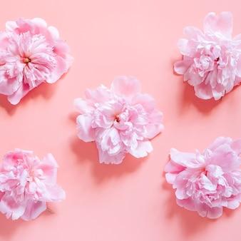 淡いピンクの背景に分離された満開のパステルピンク色のいくつかの牡丹の花の繰り返しパターン。フラットレイ、上面図。平方