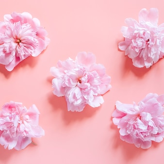 Repeating pattern of several peony flowers in full bloom pastel pink color isolated on pale pink background. flat lay, top view. square