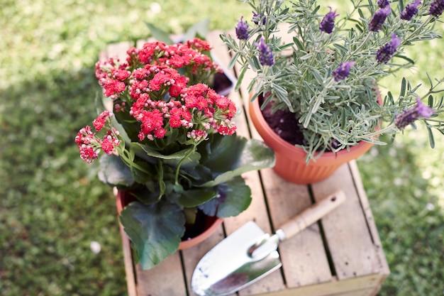 庭に花を植え直す