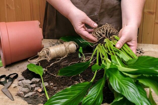 Пересаживание растений новый горшок дома перемещение дома цветок почва крафт экология экология