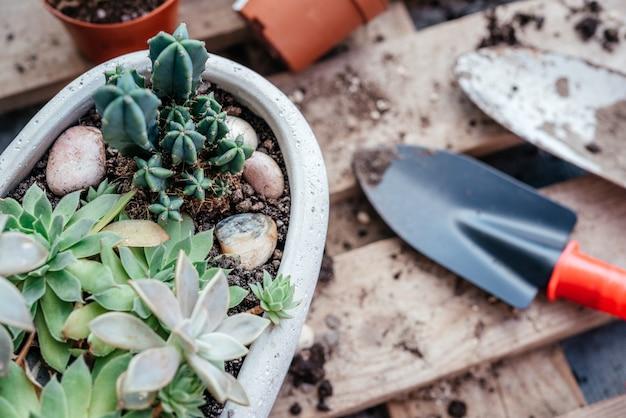 多肉植物とサボテンを家庭用工具の鉢に植え替えたり、じょうろを植えたりすることができます