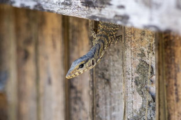 爬虫類がフェンスの穴を這う