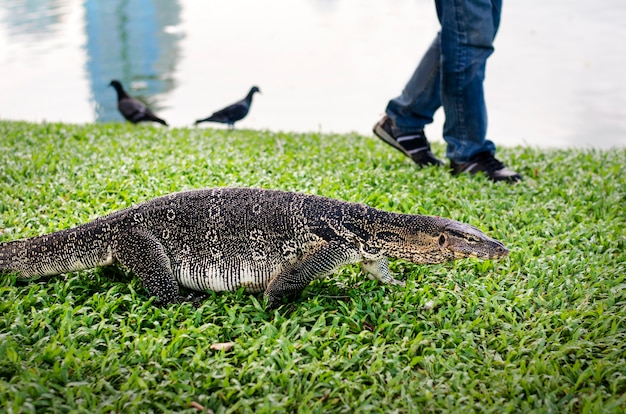 Reptile hunting park grassland concept