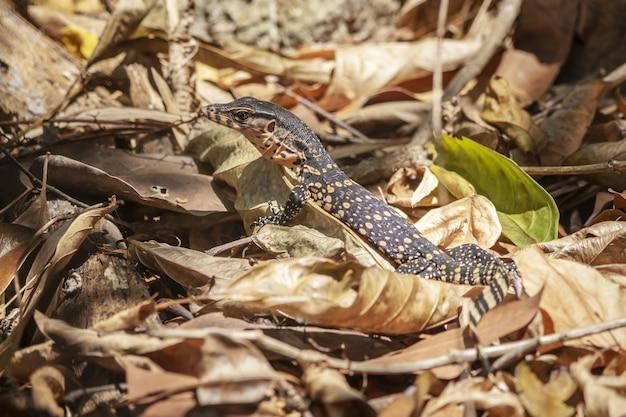 葉の山に座っている色の斑点を持つ爬虫類