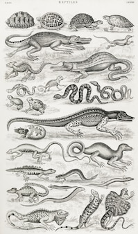 Reptiles from a history of the earth